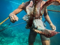Sama DIlaut fisherman with Octopus Catch, Gulf of Davao, Mindanao, Philippines