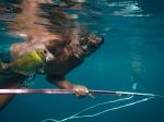 Sama nelayan Crossbow dilaut dalam Sampel, Sulawesi, Indonesia