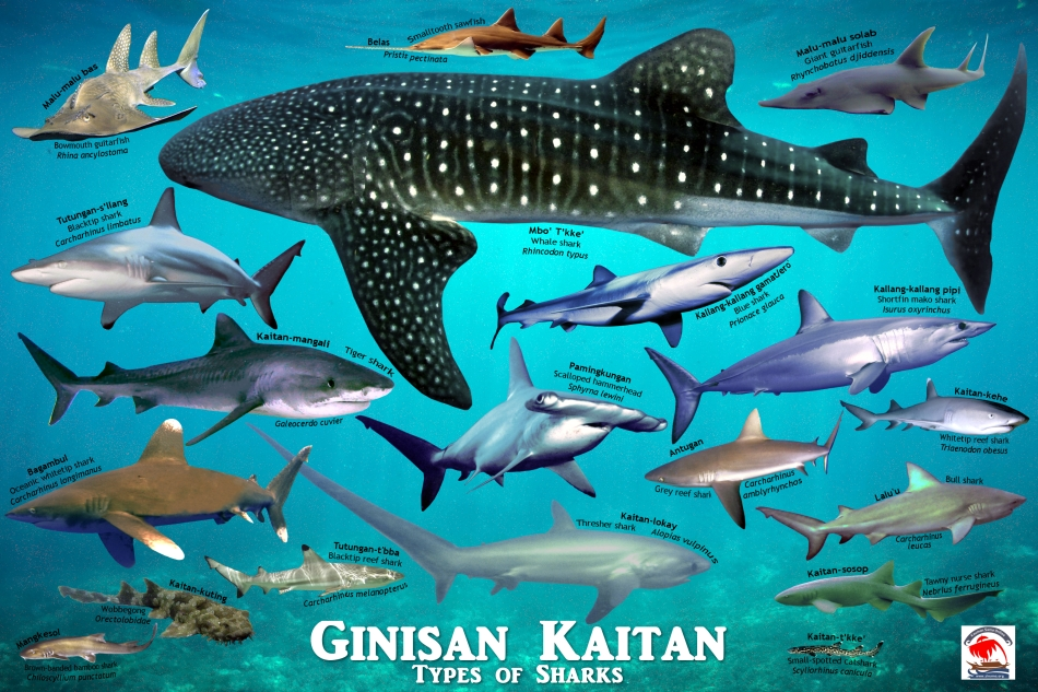kaitan-shark-ocean-back