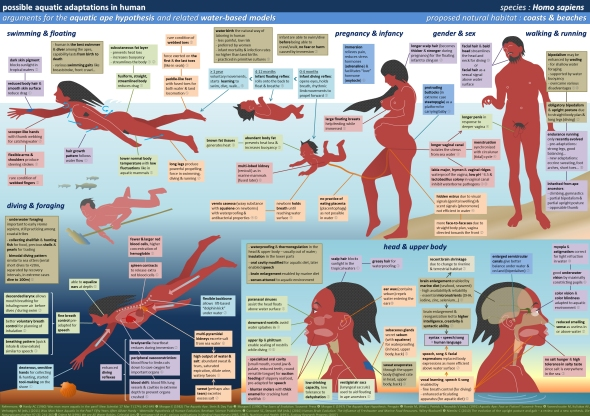 human_aquatic_adaptations