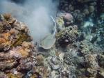 Sting Ray catch Kabalutan, Sulawesi, Indonesia. SamaDilaut